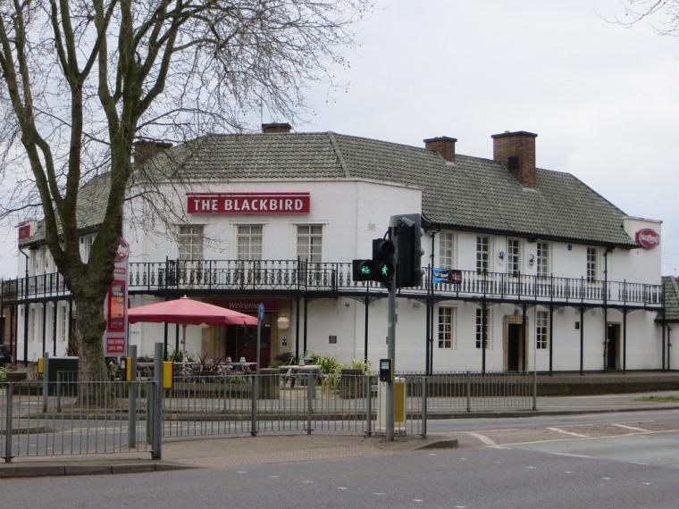 larchmont-blackbird-pub